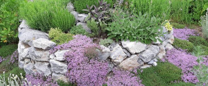 Gartentipps Juni