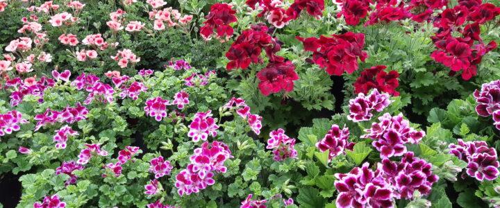 Gartentipps Juli